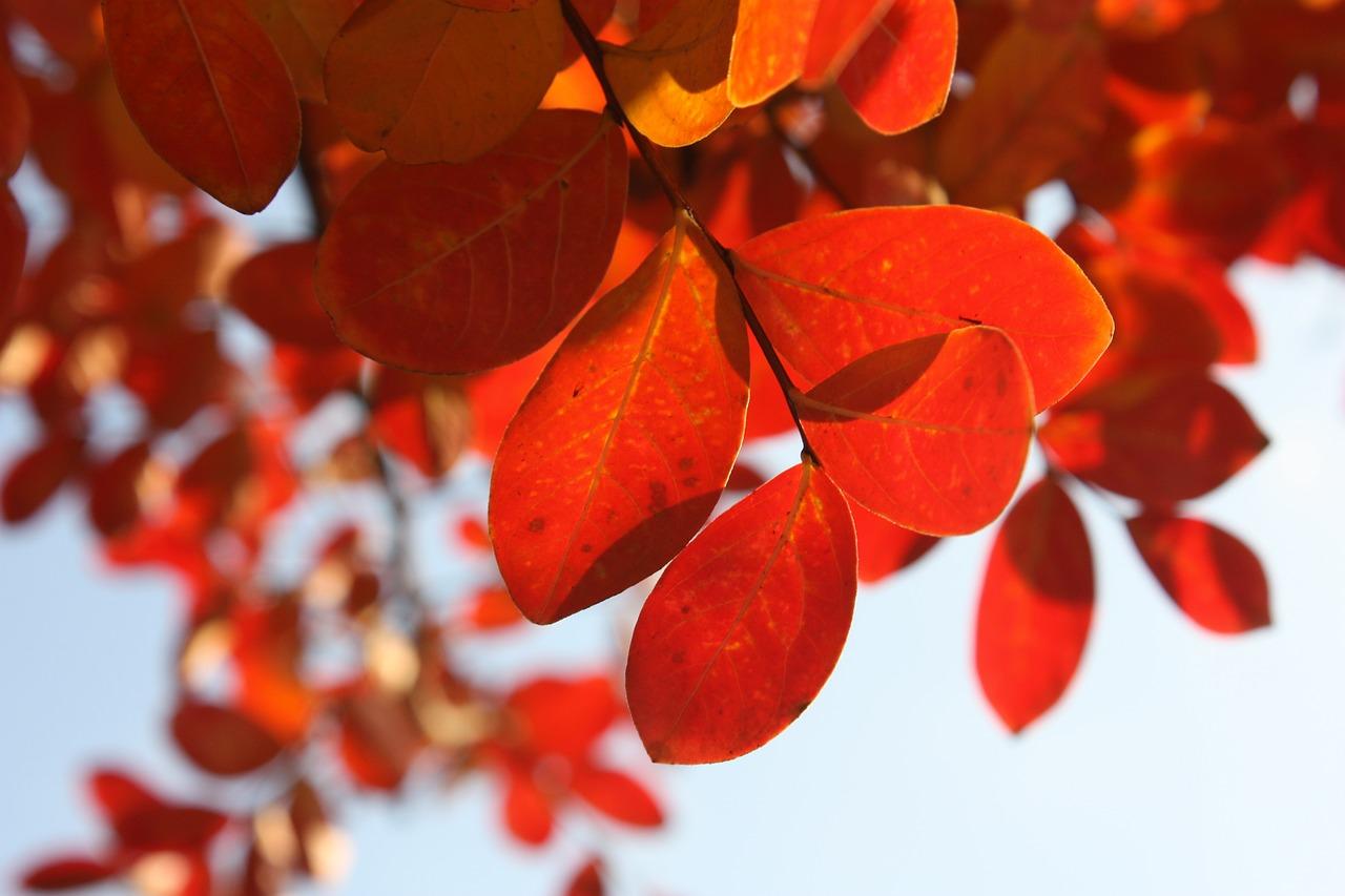 Styles für den Herbst